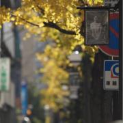 街路樹街頭